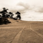 Sepia Desert